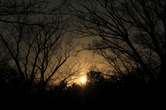 Yellow Sky and Black Branches