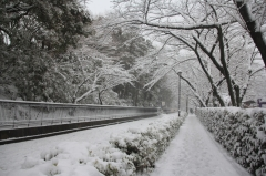 Record of Memorable Big Snow in Tokyo