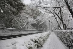 Record of Memorable Big Snow in Tokyo