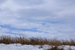Japan Nature - Blue Sky of Tama River