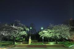 Sakura at Hibiya Park