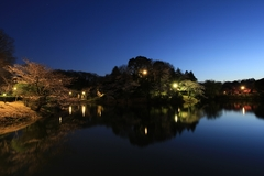 Night View at Mitsuike Park