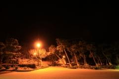 Jogashima Prefectural Park in Orange