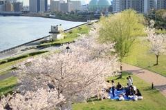 Sakura at Shioiri Park