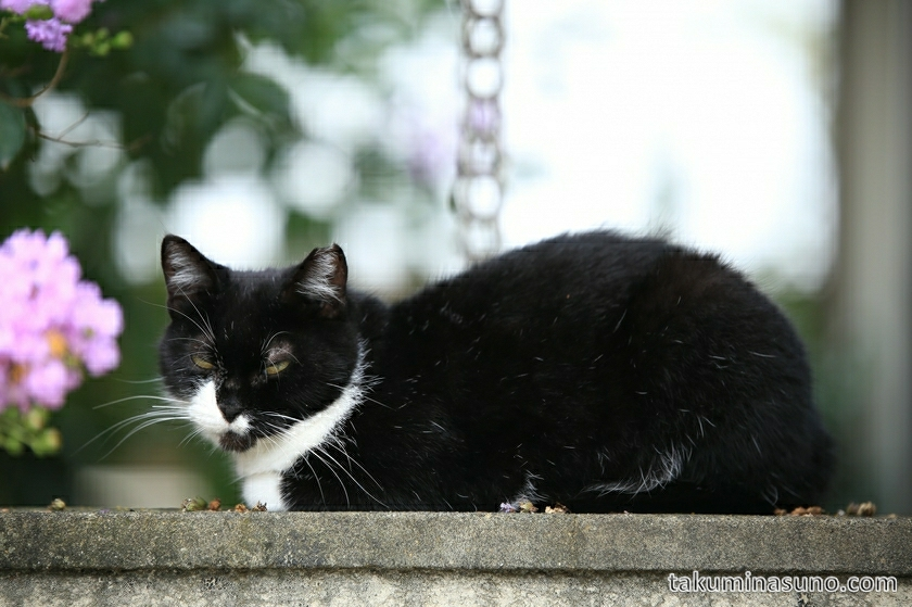 shinjuku_white_black_cat_01