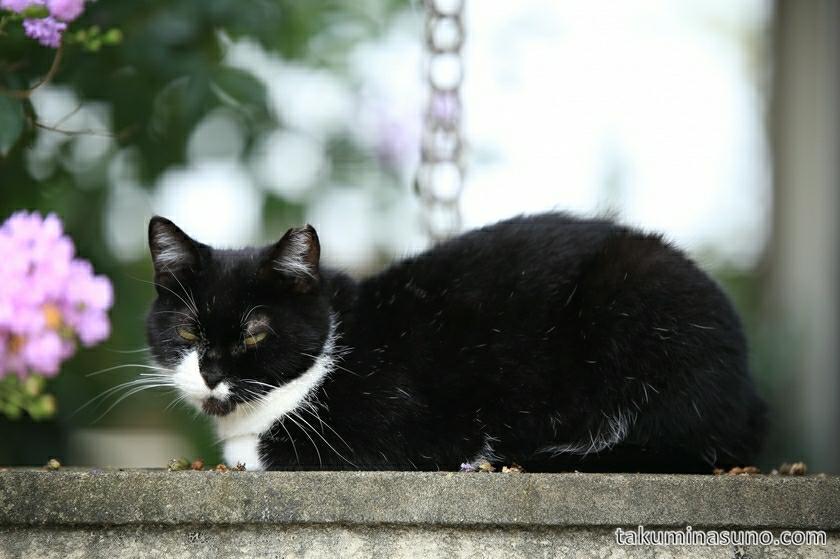 shinjuku_white_black_cat_01