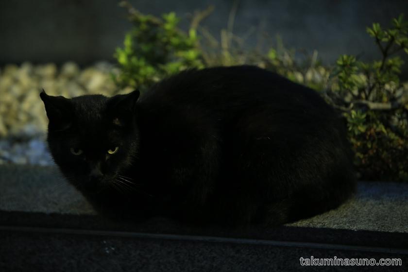 Black Cat at Yanakaginza