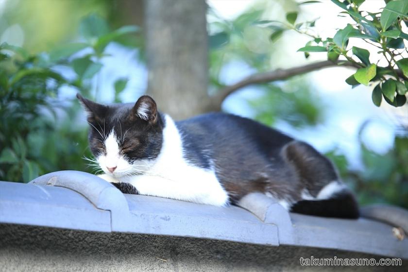 Cat at Umegaoka 01