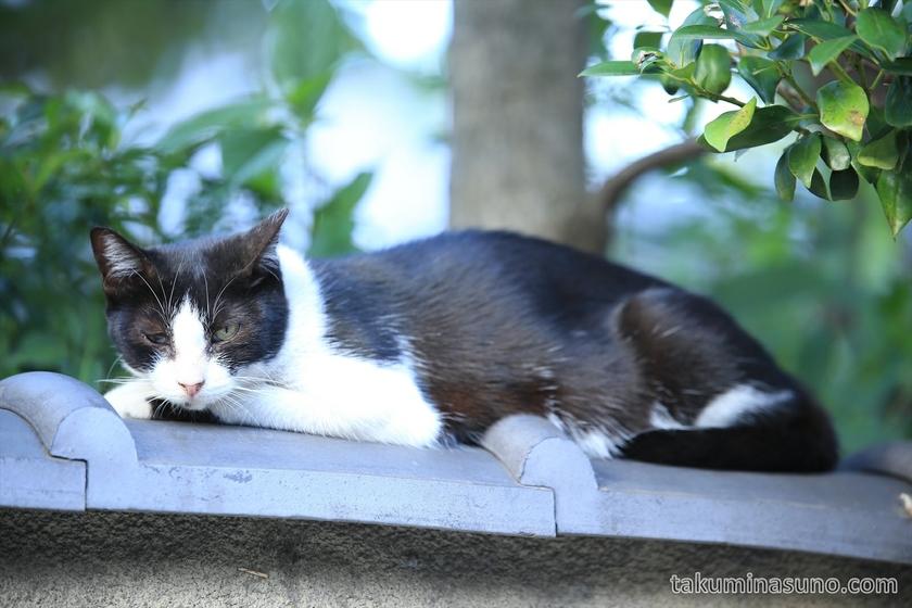 Cat at Umegaoka 02