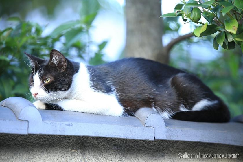 Cat at Umegaoka 03