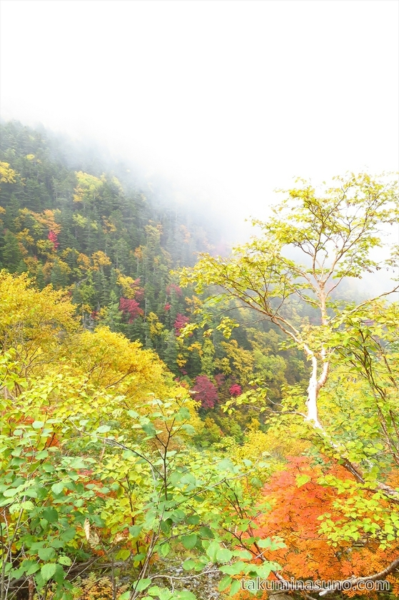 Colorful leaves at Mt Senjougatake