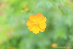 Flower Makes Peace