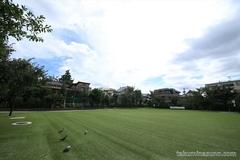 Honmachi Sakura Park, a Heaven for Doves