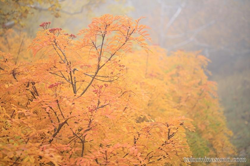 Orange leaves at Mt Senjougatake