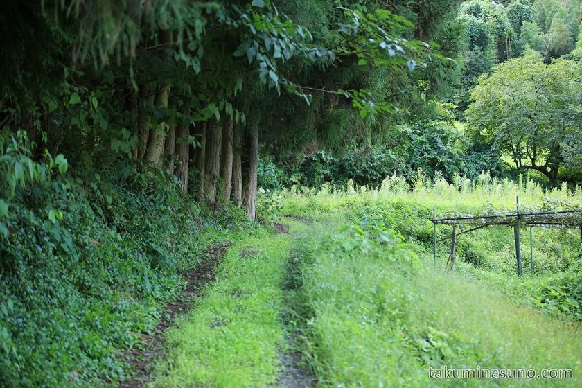 Path to Nabekura-no-taki Waterfall in Sado Island