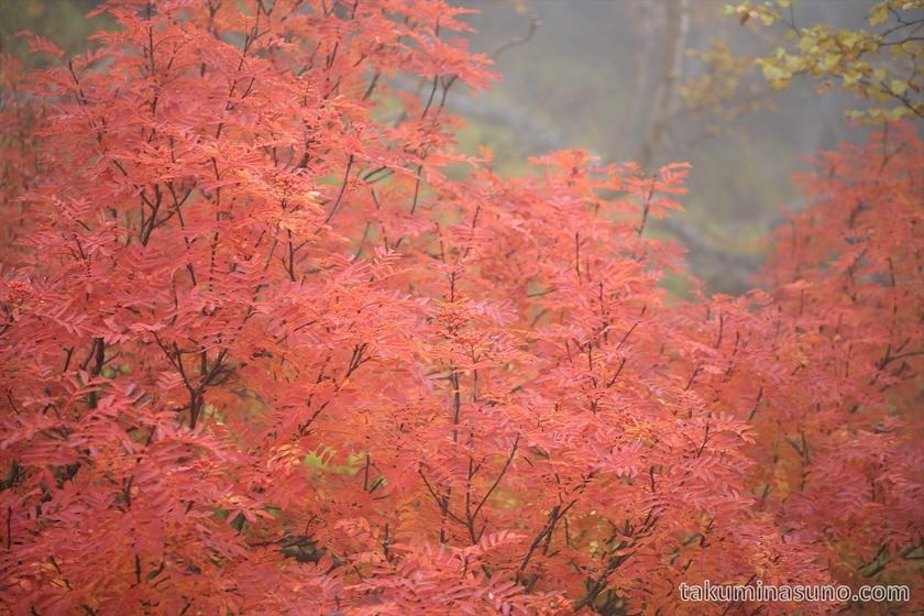 Red Leaves at Mt Senjougatake