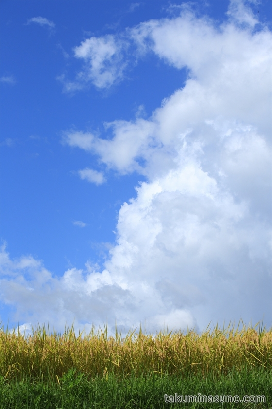 Refreshing Sky above the Rice Field