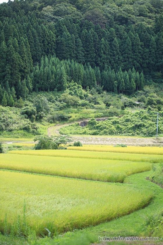 Rice Field in Mountaneous Area of Sado Island