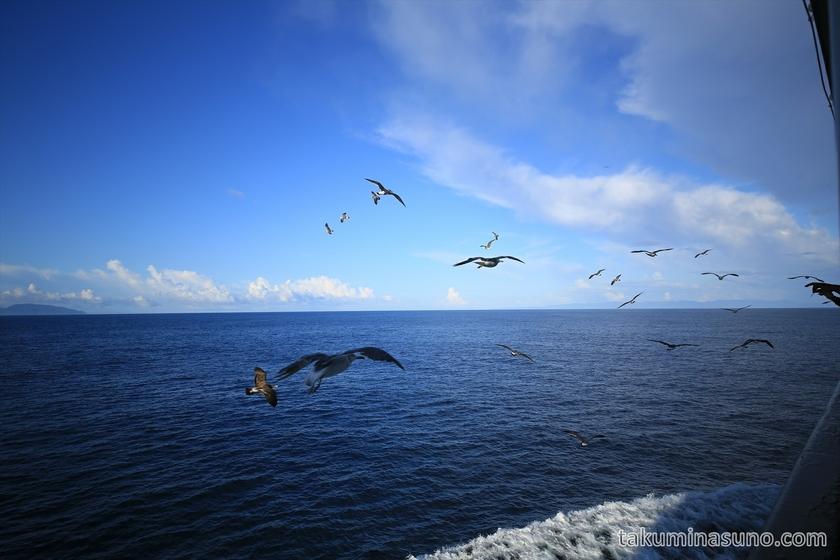 Seagulls Flying near the Ferry