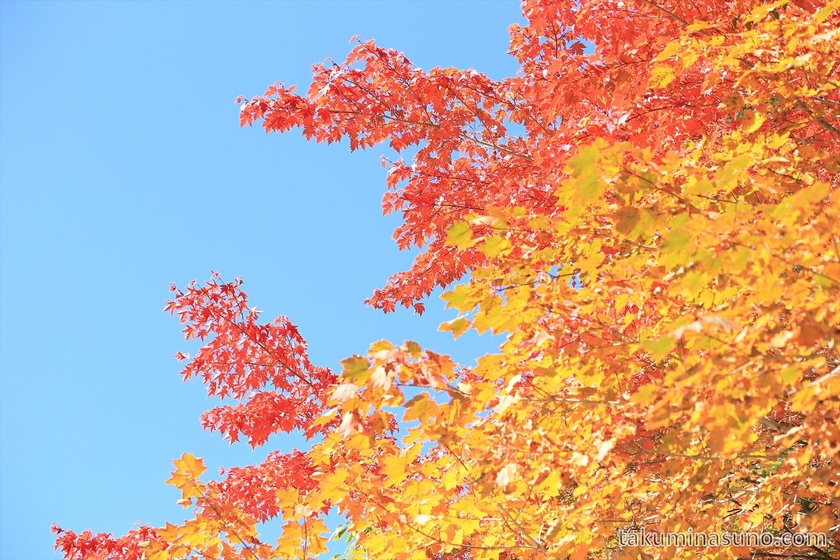 Sky and red yellow leaves at Mt Senjougatake