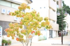 Tree with Funny Leaves