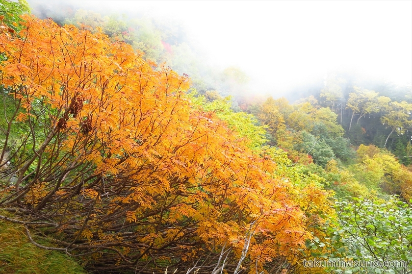 Vivid orange color at Mt Senjougatake