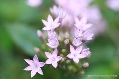 Tiny Flowers in Shinjuku Central Park