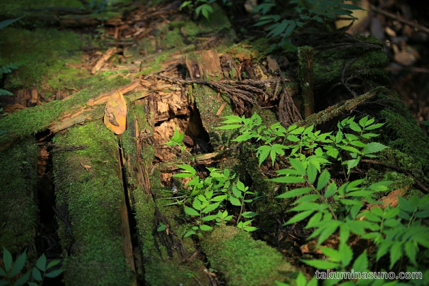 Wooden Bridge was Rotten near Nabekura-no-taki Waterfall in Sado Island