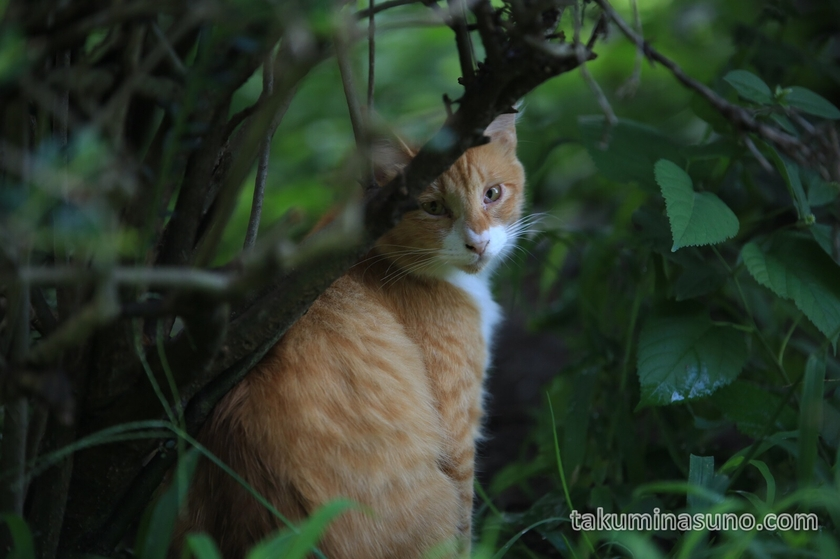 Cat in the Thicket