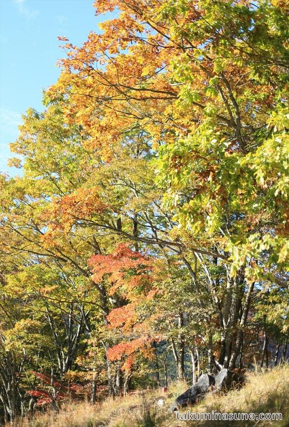 Autumn Colors along Trecking Course of Mt Mutsuishi at Okutama