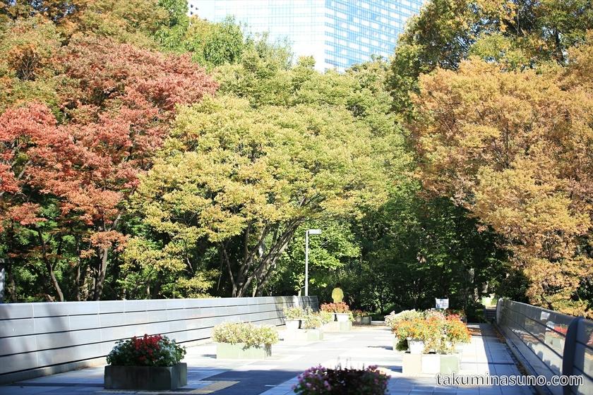 Autumn Colors at the Bridge of Shinjuku Central Park