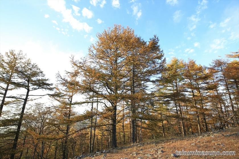 Autumn Colors at the Peak of Mt Mutsuishi at Okutama
