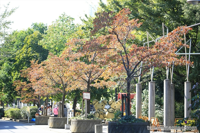 Autumn Colors of Dogwood on the Street of Hatsudai