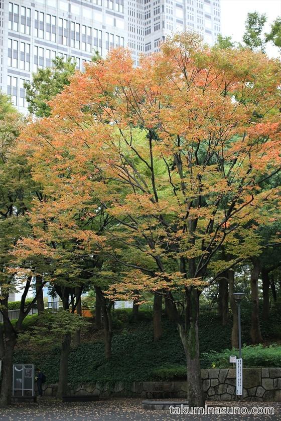 Autumn Colors of Sakura Tree at Shinjuku Central Park