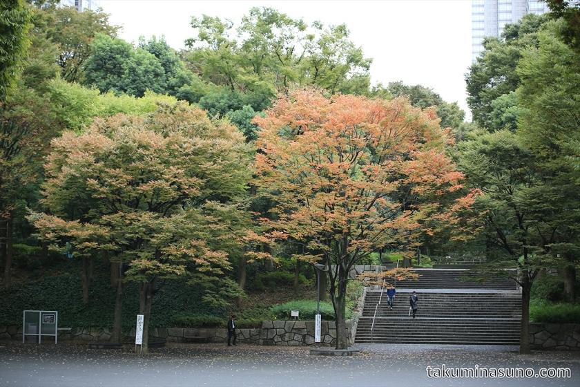 Autumn Colors of Sakura Trees at Shinjuku Central Park