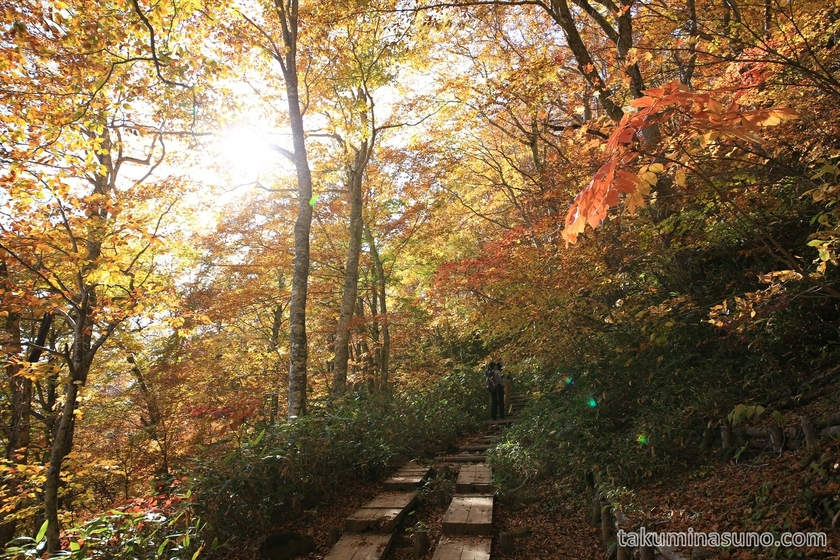 Autumn colors and sunshine at Oze National Park