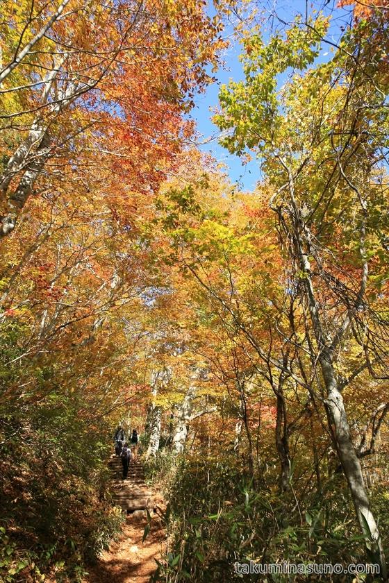 Autumn colors path at Oze National Park