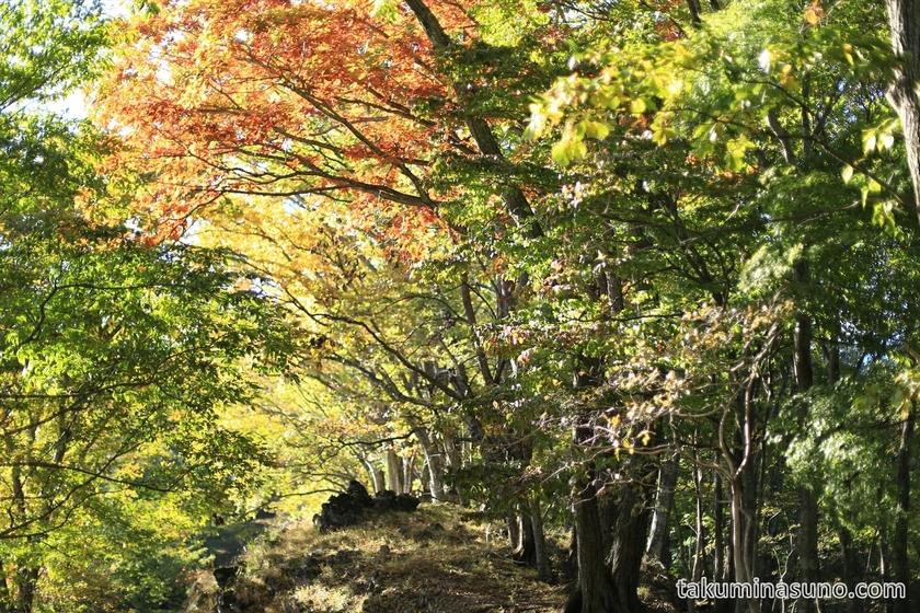 Autumn leaves and nice sunshine of Mt Mutsuishi
