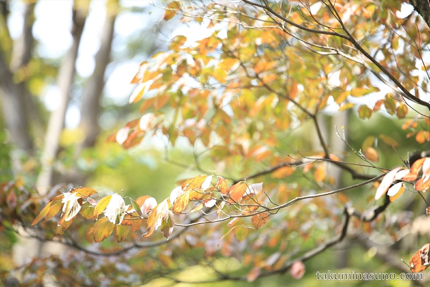 Beginning of autumn colors in Shinjuku Central Park 2
