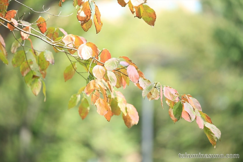 Beginning of autumn colors in Shinjuku Central Park 3