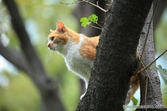 Cat Climbing up the Tree to Enjoy Autumn Colors