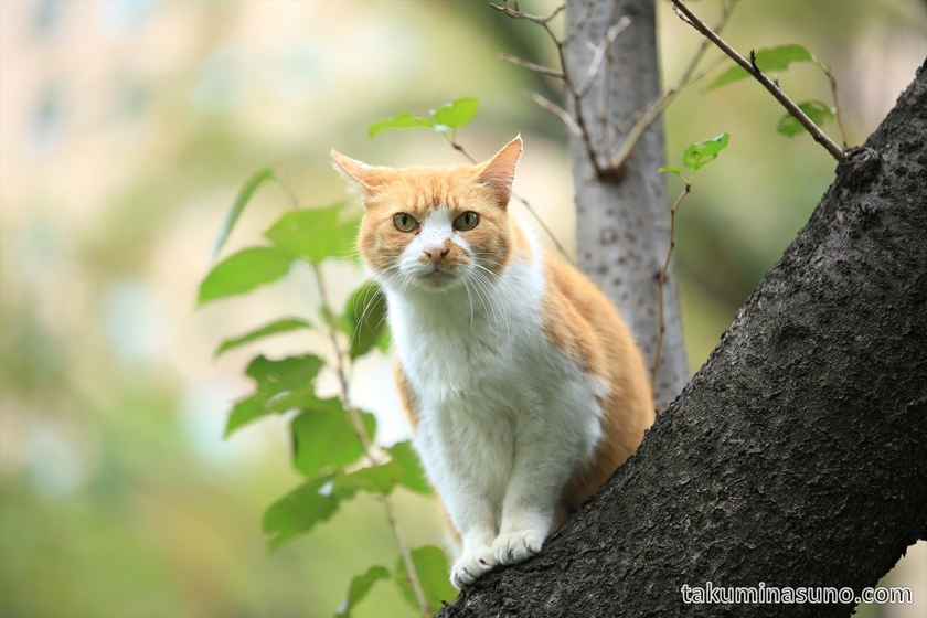 Cat sitting on the tree at Shinjuku Central Park