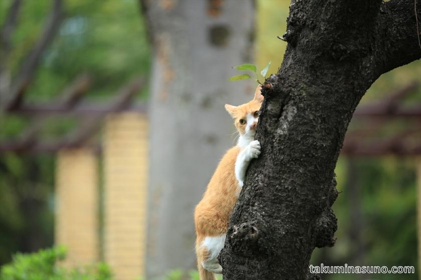 Climbing cat at Shinjuku Central Park