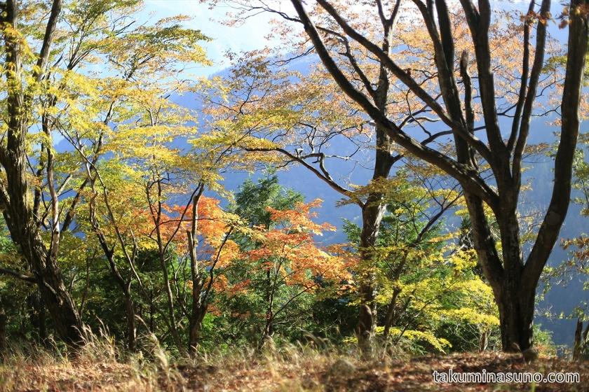 Colorful leaves gatherd along Trecking Course of Mt Mutsuishi at Okutama