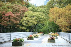 Autumn Colors Report 2014 - Colorful Leaves of Shinjuku Central Park