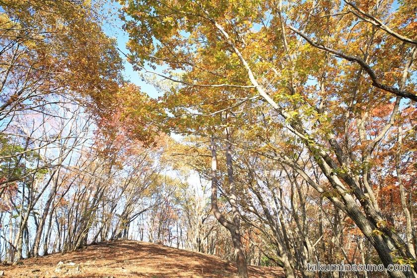 Curtain of Autumn Leaves of Mt Mutsuishi at Okutama