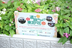 Let's Make Tohoku Flowers Bloom in the Street!