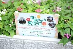 Let's Make Tohoku Flowers Bloom in the Street!
