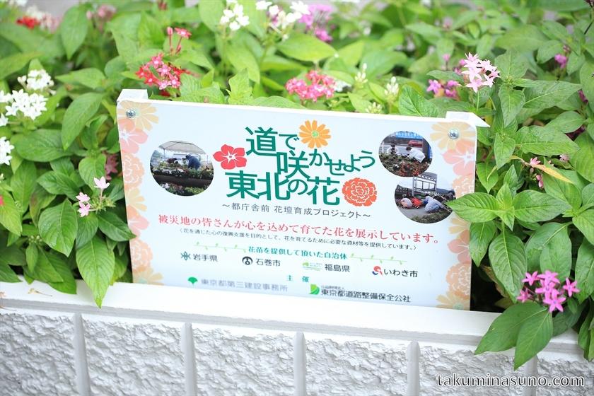 Flower Bed in Shinjuku from Tohoku Region