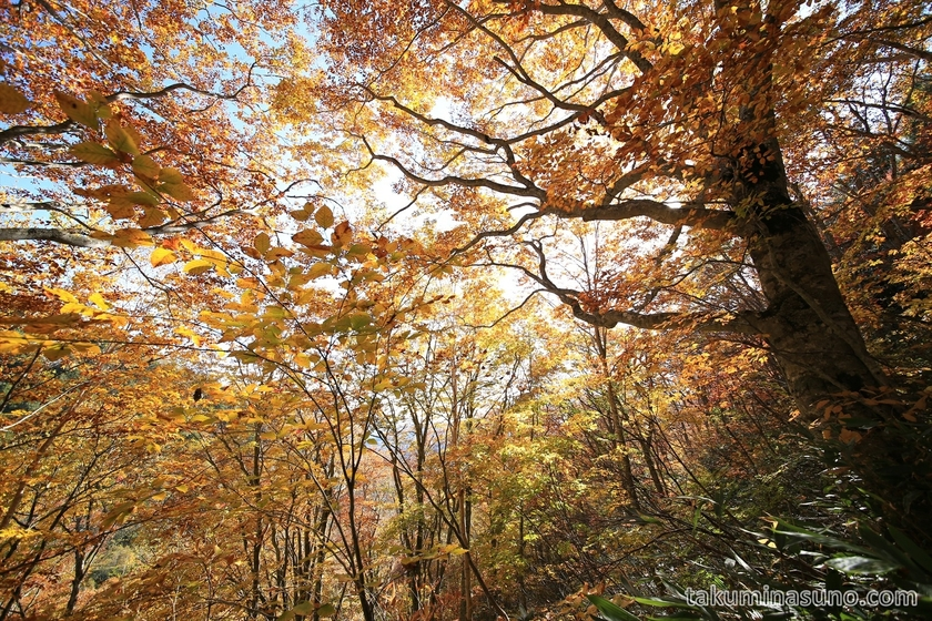 Full of autumn colors at Oze National Park